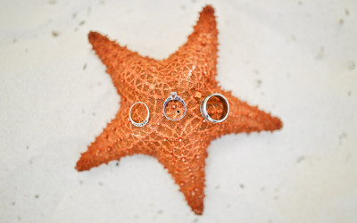 Wedding Rings on a Starfish!