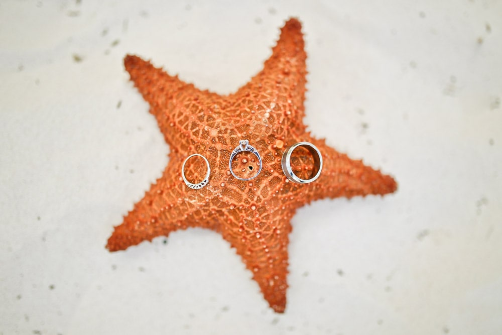 Wedding Rings on a Starfish!